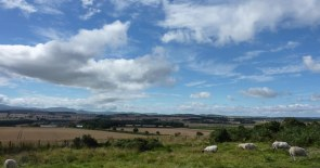 Climbing the hill towards St Cuthberts Cave. Looking west towards the Cheviots (not the sheep!)