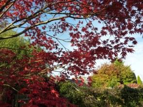 The Garden in Autumn.